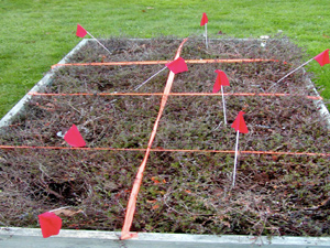 Cranberry filed plots photo