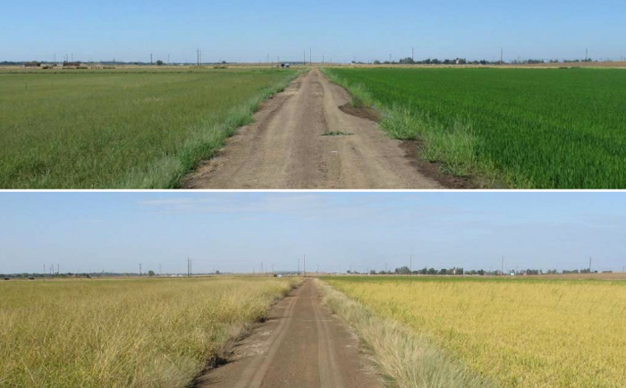 Photo of fields under different management practices.